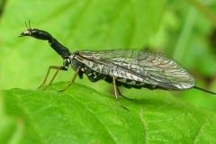 Hmyz různý